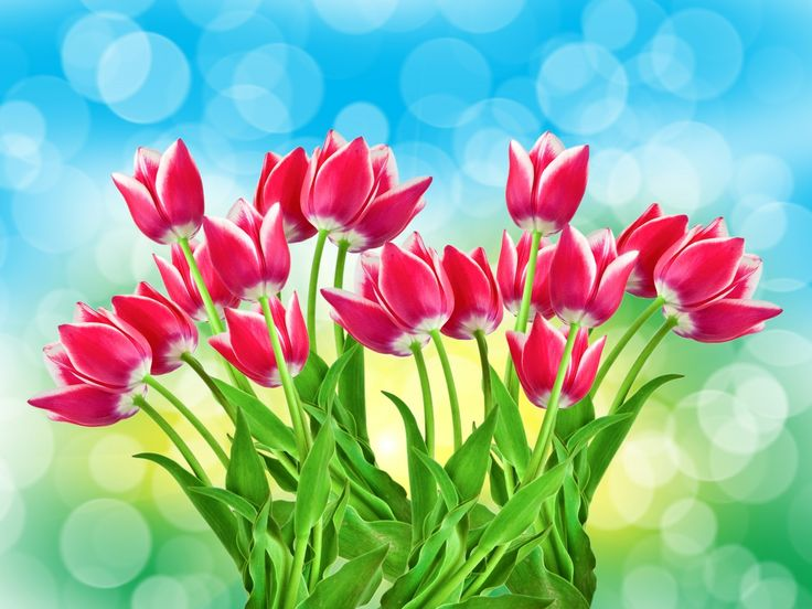 Az őshazából magunkkal hozott motívum. A nőiesség, a szépség, a szerelem, a szeretet, a tisztelet, a kegyelet és az elismerés jelképe. Őseink hittek a gonoszt távol tartó szerepében, ezért kapufélfára faragták (ahogy a mongolok is). A tulipános életfa létezése is azt bizonyítja, hogy a tulipán ősi jelkép./ Szimbólumok/Növényszimbolika: Tulipán ~ szimbólumok, növényszimbólumok, növényszimbolika, virágszimbólumok, virágszimbolika, érdekességek, ezotéria, fényörvény, jelképek, spiritu...