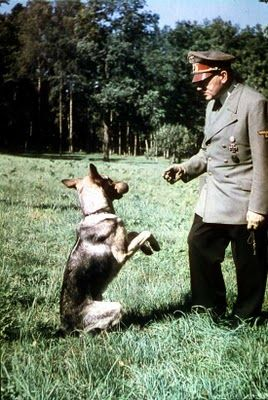 Hitler plays with his favorite dog, Blondi.  Hitler was a fastidious Vegetarian, did not drink or smoke, and eschewed most luxury.  However, as the war began its downward turn for Germany, he became ever increasingly addicted to amphetamines prescribed by his personal physician.