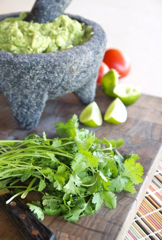 Everything You Need to Know About Growing Cilantro — Herb Gardening 101 | The Kitchn