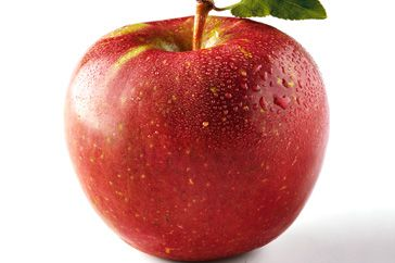 Ten secrets of Fuji apples cooking tips - how_to cooking tips - Here's all you need to know about sweet Fuji apples.