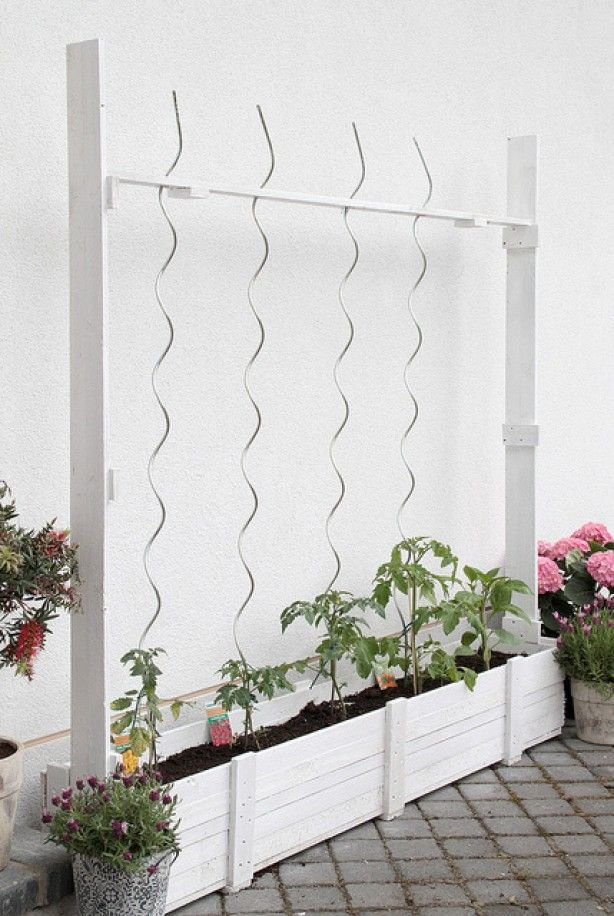 Mooie strakke bak voor tomatenplanten. Ideaal zijn de spiraal stokken, de tomatenplanten hoeven niet meer begeleidt te worden maar binden zichzelf in de spiraal omhoog!  http://www.moestuinwebshop.nl/index.php?p=53&cat=482
