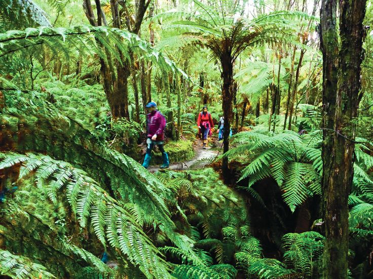 The newly opened Tarawera Trail is attracting more walkers each and every day. Photo by David Walmsley.