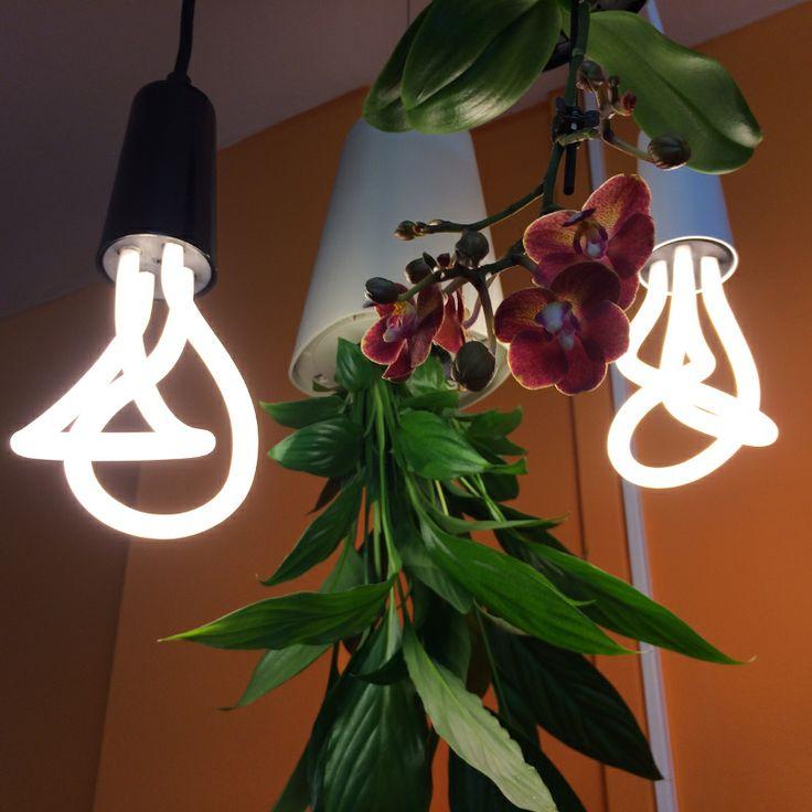 Fejjel lefelé lógó növényekkel és dizájn izzókkal turbózott iroda