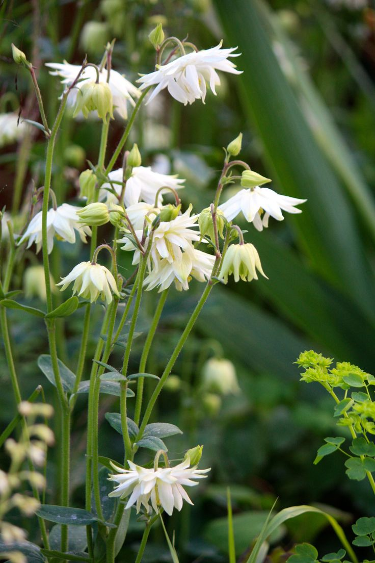 341 best gardening white flowers images on pinterest white chelsea flower show the vestra wealth garden of mindful living dhlflorist Image collections