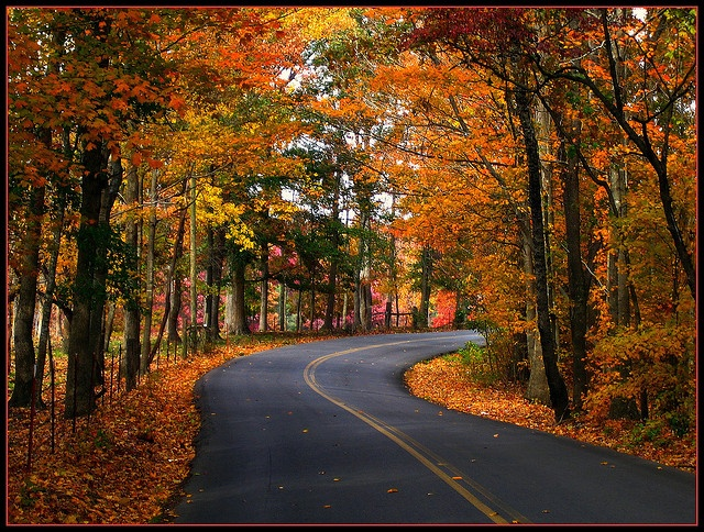 Fall road in Tennessee. There is nothing like driving thru ...