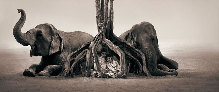 Magical Animal Photography by Gregory Colbert | Abduzeedo Design Inspiration & Tutorials