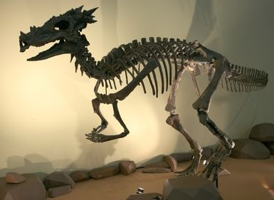 This is a real dinosaur fossil found in Wyoming in 2004.  It has been identified as a young Pachycephalosaurus.  As the dinosaur ages the spikes on the head smooth out.  If this is not a dead on land dragon there simply is not one.....looks like a dragon to me.