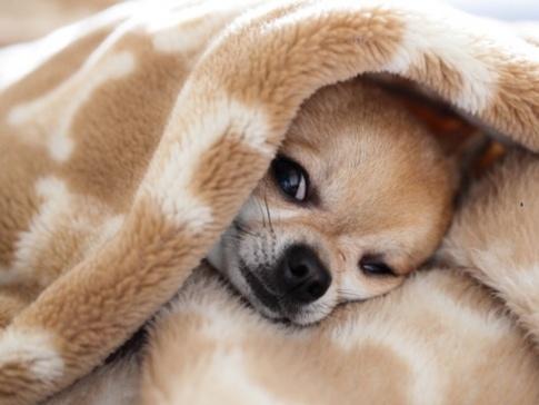 Los perros más pequeños | Caso Cerrado, Ana María Polo, Dra. Polo, Ana Maria Polo, fotos, videos, casos, shows, entretenimiento | Telemundo