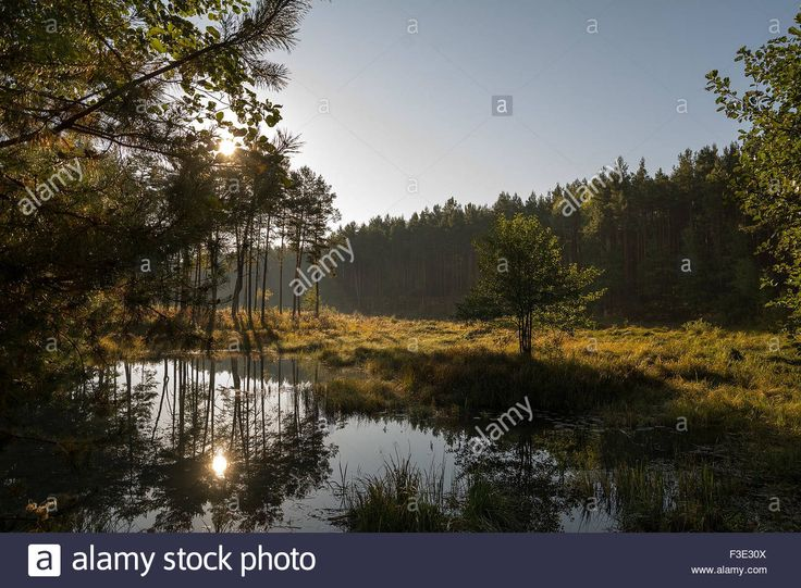 Download this stock image: Pond in the forest in autumn - F3E30X from Alamy's library of millions of high resolution stock photos, illustrations and vectors.