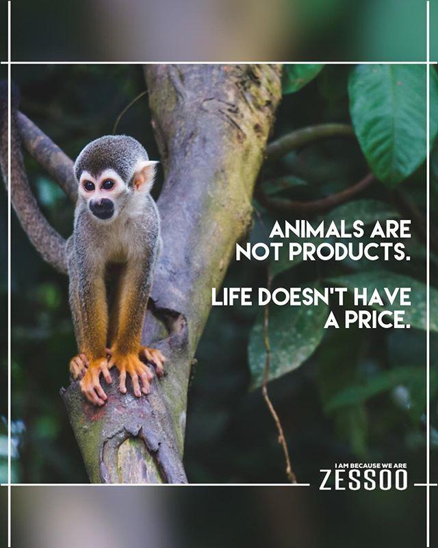 Cruelty Free Fashion Yoga For Kids Amazon Rainforest Animals