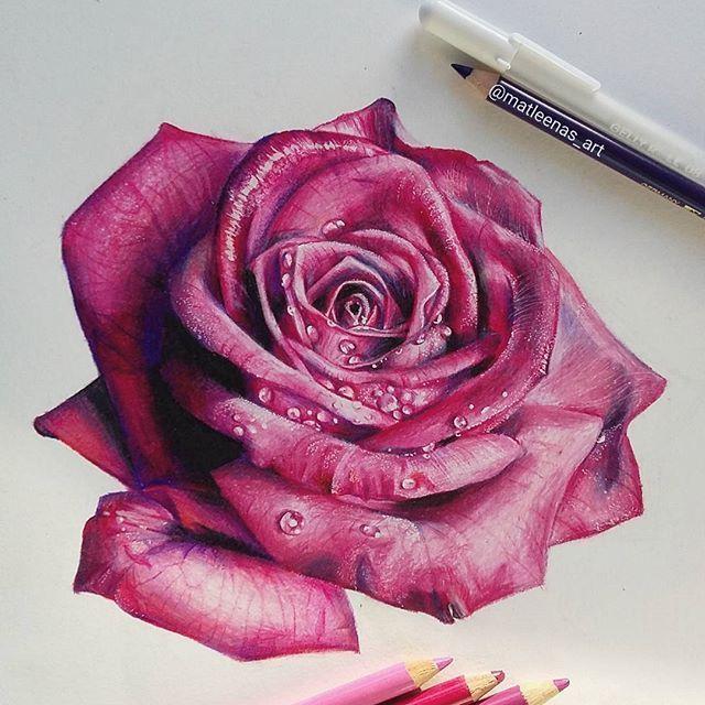 10 Mesmerising Drawing Flowers Mandala Ideas In 2020 Roses Drawing Rose Drawing Color Pencil Drawing