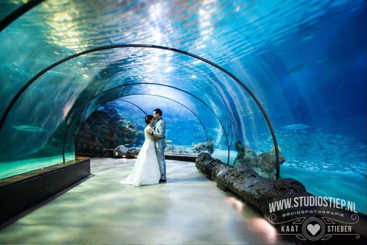 Trouwen in Blijdorp #wedding #zoo #fish #blijdorp #bruiloft #dierentuin amazing wedding photography in #aquarium www.studiostiep.nl