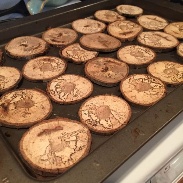 After cutting these tree cookies you will want to bake them. I suggest low heat for over an hour. I baked them at 200 degrees for an hour and 15 mins. This will insure there are no live critters in them!