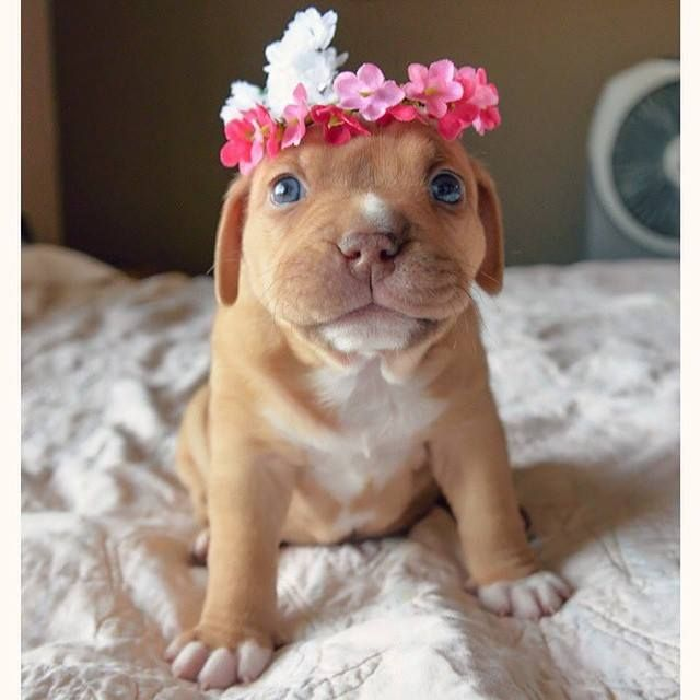 Adorable names for pitties-itty bitty pitty committee!