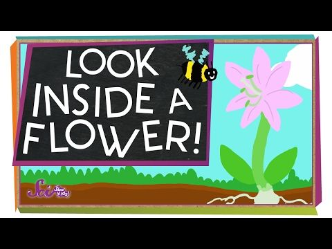 Our botanists have loved learning about flowers and sharing their knowledge in many different ways during 'Thinking and Learning Time'. We h...