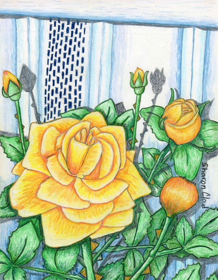 """My Peace Roses' 9x12 colored pencil drawing."