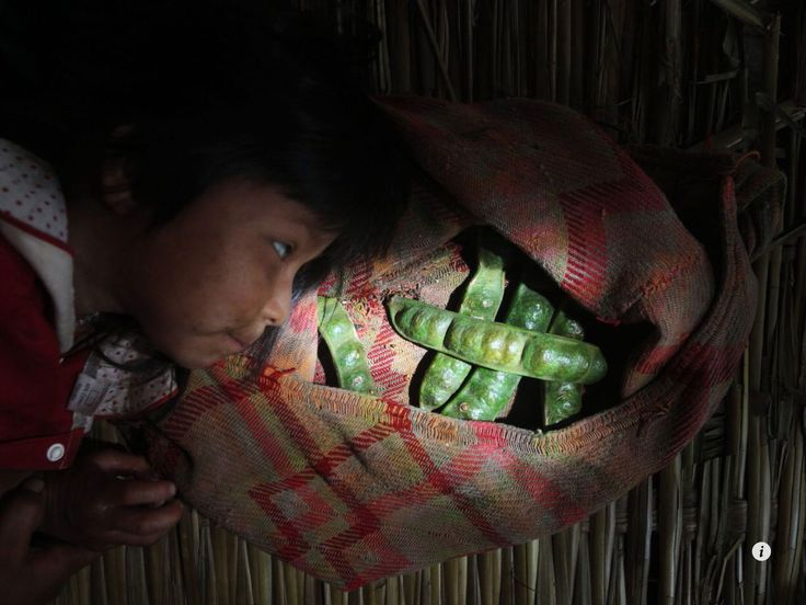 Little girl in Bolivia eying a snack - Inga tree pods. Image from NATIONAL GEOGRAPHIC, September 2014.