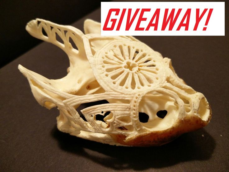 Carved Snapping Turtle Skull!