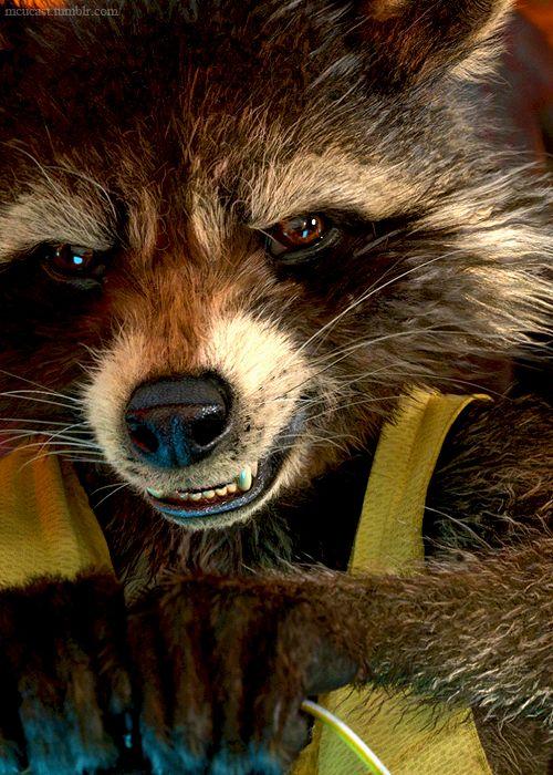 Best 25+ Rocket raccoon ideas on Pinterest | First marvel ...