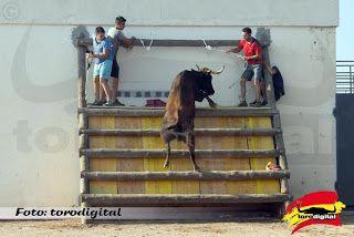 torodigital: Concluye el XVIII Concurso de ganaderías en Pla d...