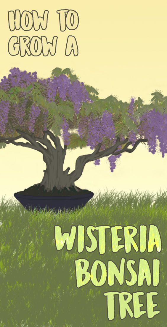 Garden Bush: Best 10+ Wisteria Bonsai Ideas On Pinterest