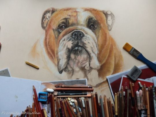 """In the studio"" Work in progress. English Bulldog portrait by Canis Art Studio"
