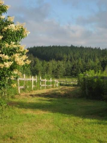 walking path on the property.  For Sale - Hill House and 250 acres near Antigonish NS http://www.nspropertysale.com