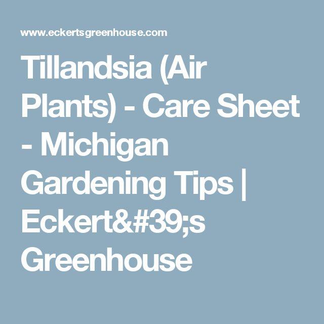 Tillandsia (Air Plants) - Care Sheet - Michigan Gardening Tips   Eckert's Greenhouse