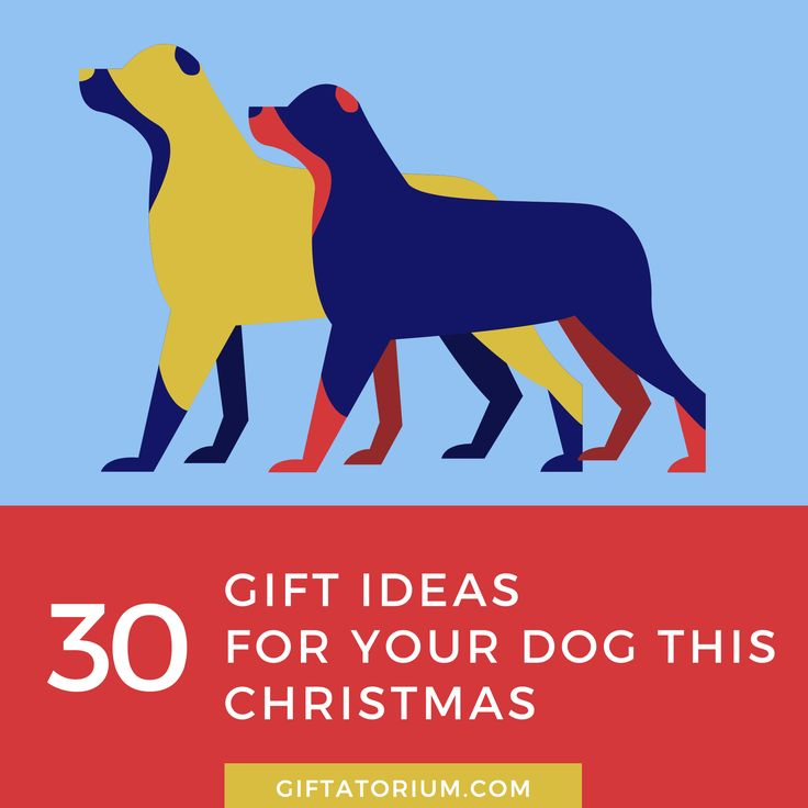 Your best little buddy loves Christmas just as much as your children and can't wait to see what Santa has in store this year! This list of 30 top gift ideas, combines the fun and fantastic with the practical and handy.  We think you will love these gifts just as much as your pet dog!