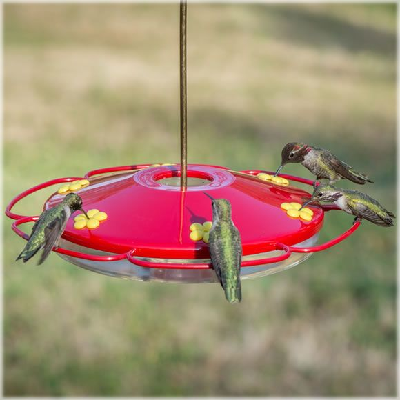 17 images about hummingbirds 101 on pinterest hummingbirds rare photos and birds. Black Bedroom Furniture Sets. Home Design Ideas