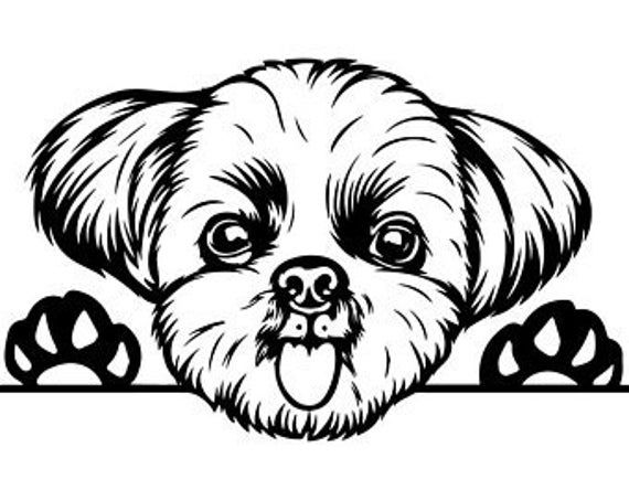 Shhi Tzu Dog Vinyl Sticker For Car Wall Laptop Bumper Decal Etsy In 2021 Dog Drawing Shih Tzu Shih Tzu Dog