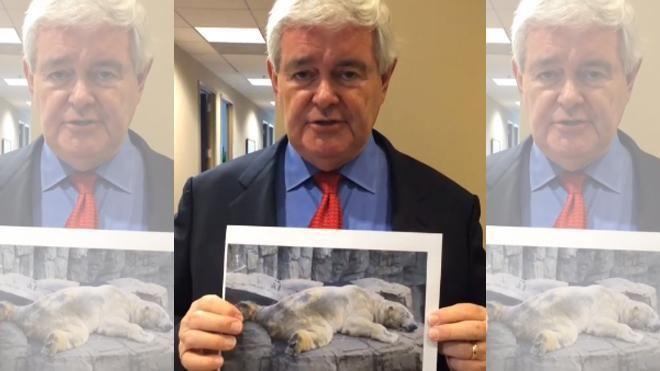 Newt Gingrich Releases Heartfelt PSA To Save Argentinian Polar Bear #Storm4Arturo http://latino.foxnews.com/latino/lifestyle/2014/07/17/newt-gingrich-releases-heartfelt-psa-to-save-argentinean-polar-bear/… pic.twitter.com/irYbCJPVJ2