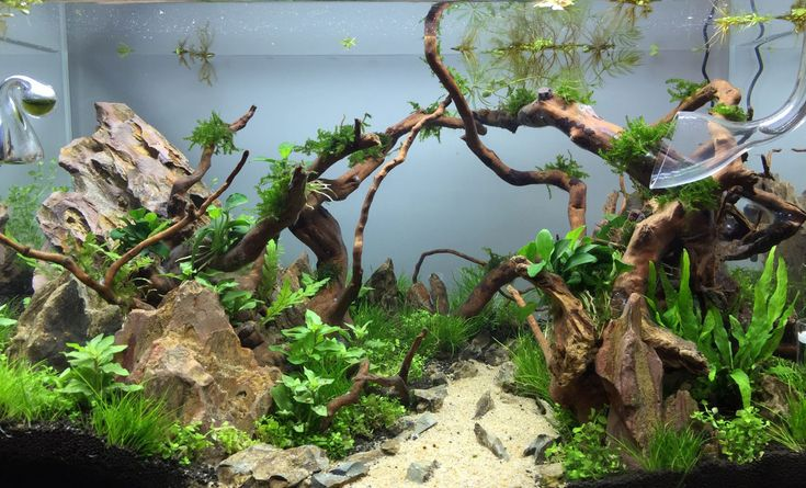 40l Premier Aquascape Aquarium Idea Pinterest