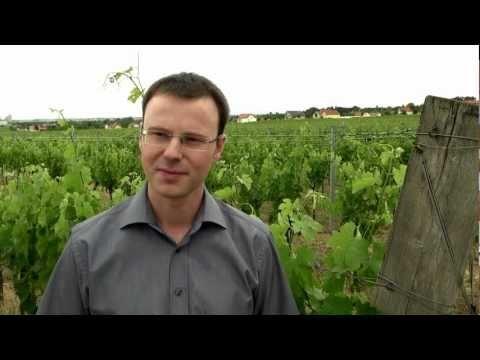 Dåliga och bra insekter och djur i vingården.