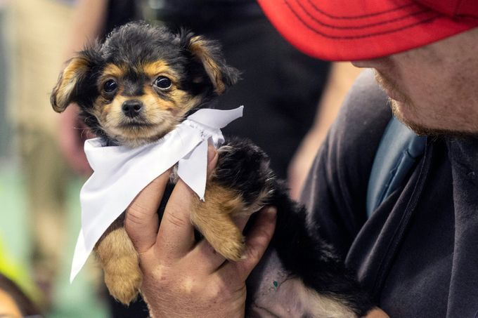 Mutt Madness Will Melt Your Heart Dogs And Puppies Mutt Dogs Up For Adoption