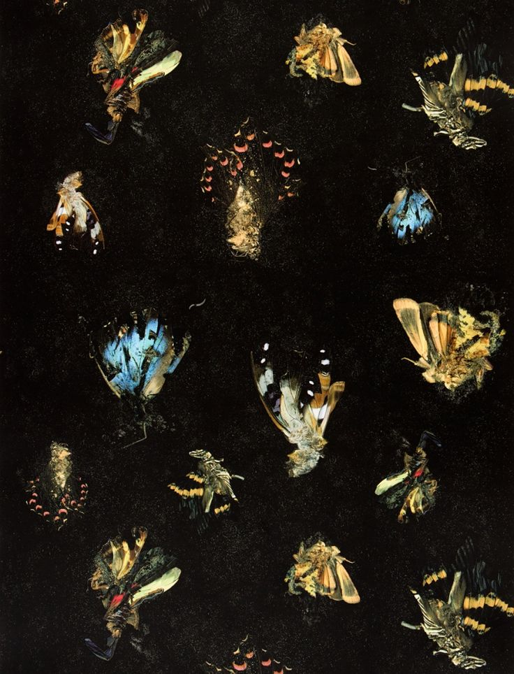 Other Criteria - Mat Collishaw – Insecticide Wallpaper http://matcollishaw.com/works
