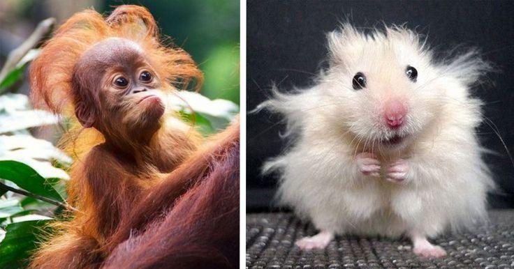Vilka roliga frippor! Här är 10 djur med fräna frisyrer som får dig att skratta.