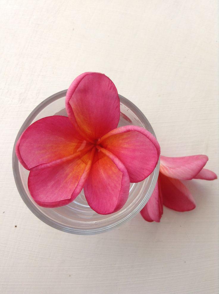 Balinese pink frangipani