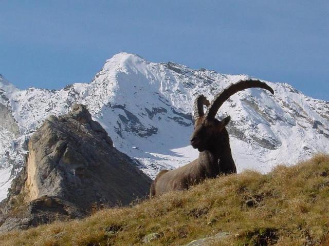 Il percorso di trekking che vi proponiamo è un percorso della durata di 4-5 ore circa, adatto a persone esperte.