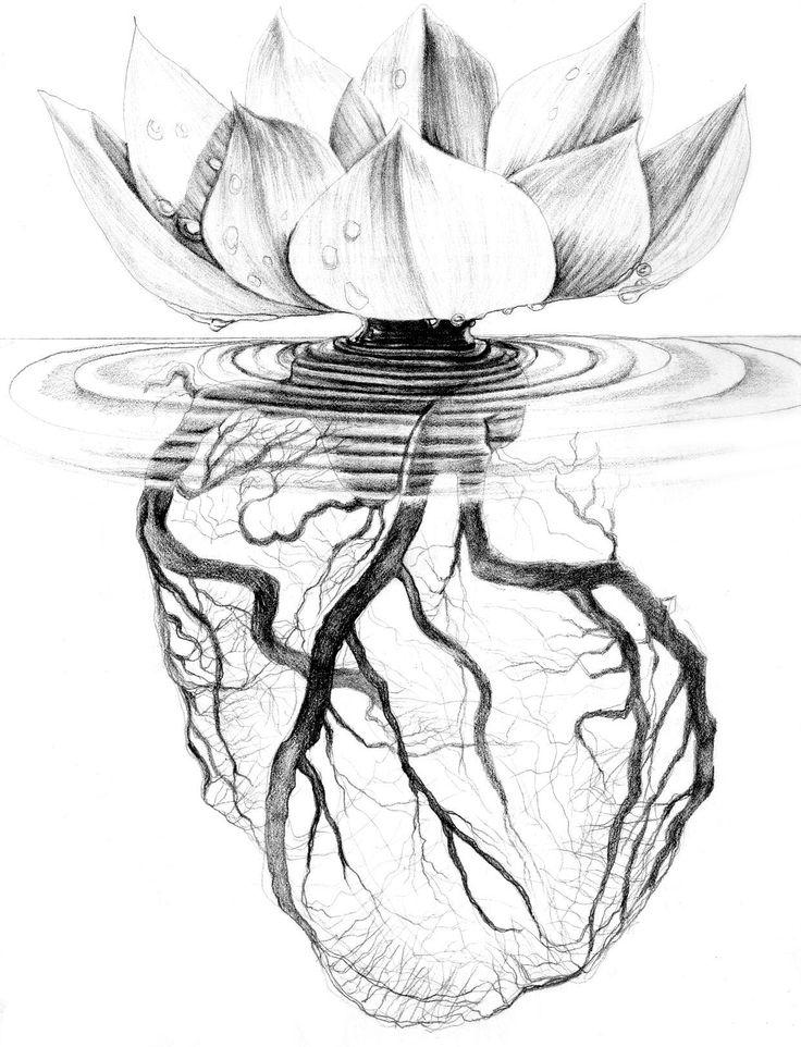 Lotus Flower Drawings Drawing Tattoos Flowers