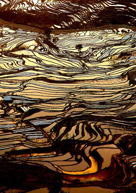 Ricefields in China by Isabelle Chauvel