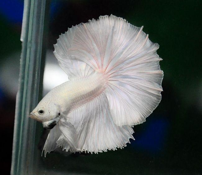 Niagara Aquarium Pet Store