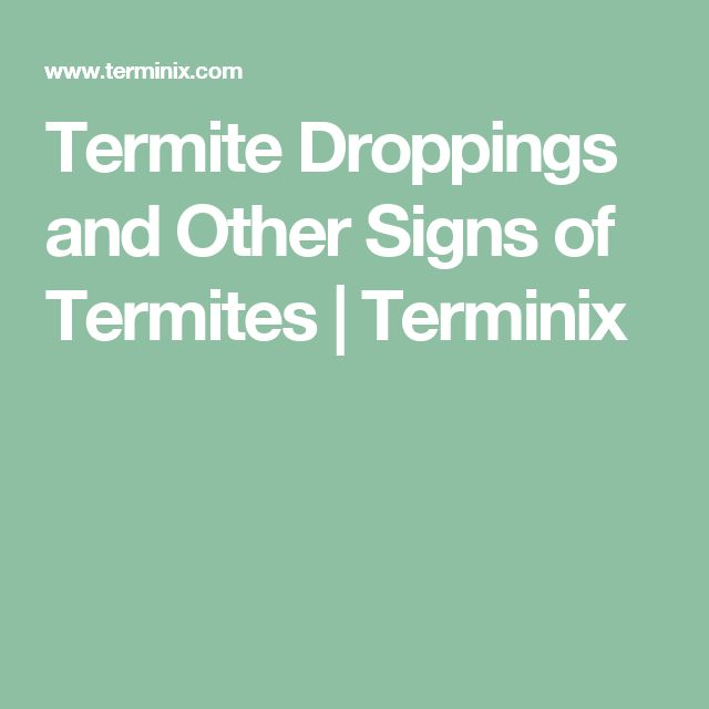 Termite Droppings and Other Signs of Termites   Terminix