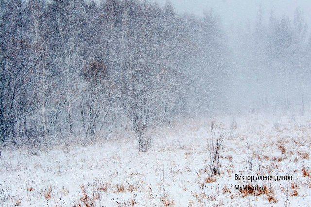Лес в снегу. Первый снег декабря