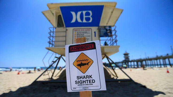 New shark warning system will alert Newport Beach lifeguards when predators lurk - LA Times