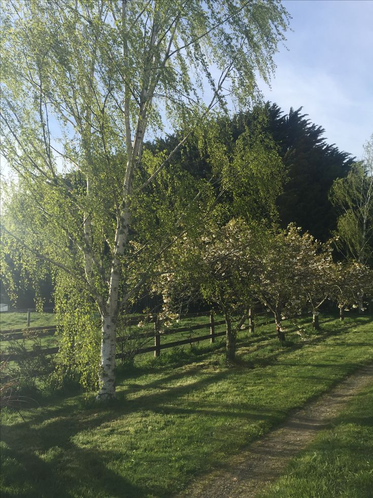The gardens at the Woodend farm looking beautiful this year #ashbournealpacas #finefleecedhuacayas