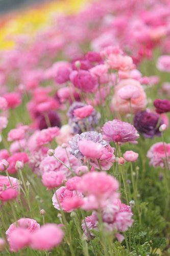 Beautiful Garden of Pink Flowers