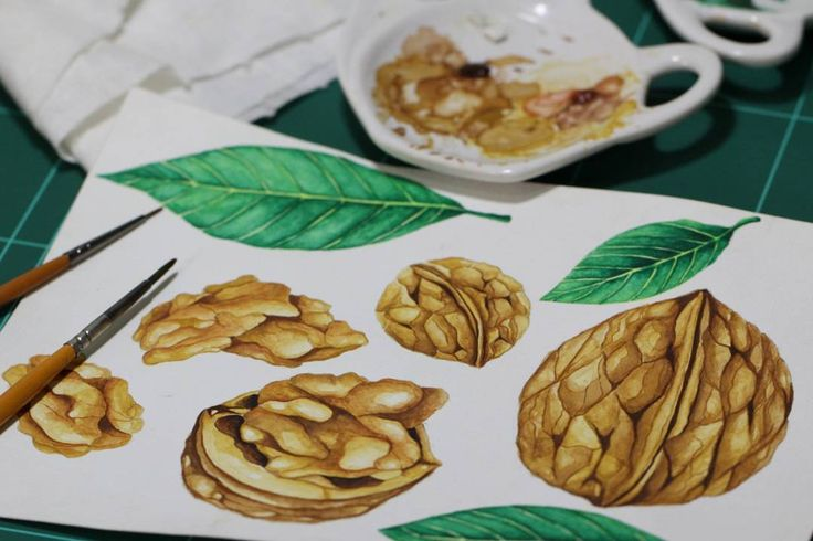 Walnuts watercolor painting is done, I drawing in the canson paper.  #walnuts #nuts #fineart #artprints #botanicalwatercolor #watercolor #walnut #drawing #herbs #granola #painting #brush #handmade #design #creativemarket #artprint #watercolour #handpainted #handdrawn #illustration #botanical #illustration #botanicalillustration #drawing #garden #peanuts #nature  #creativemarket #botanicalart #realisticart