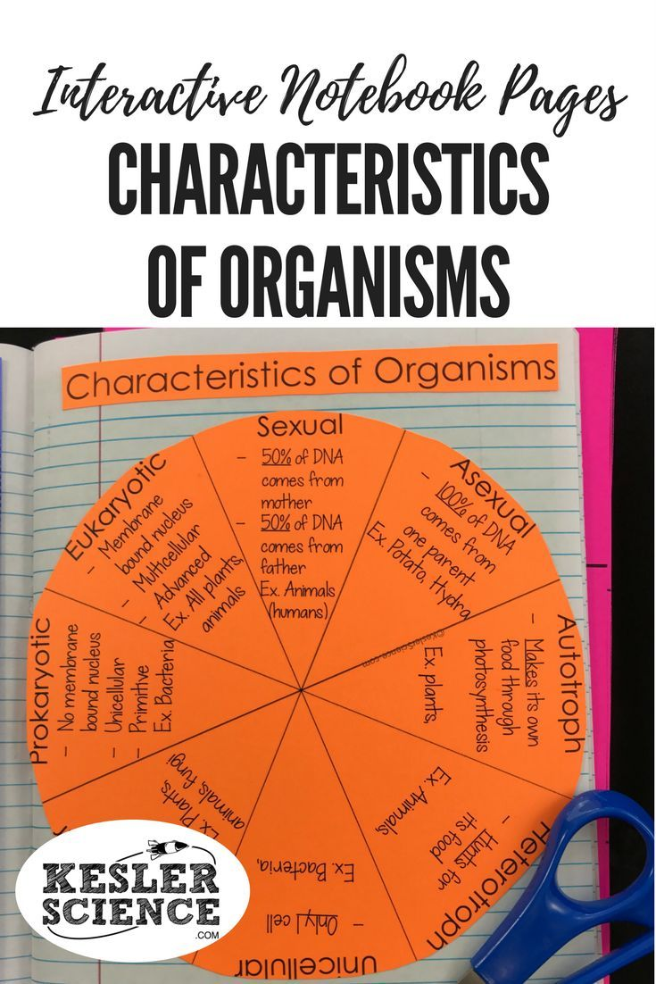 Unique characteristics of organisms wheel reinforces vocabulary words including sexual and asexual reproduction, autotroph and heterotroph, unicellular and multicellular organisms, eukaryotic and prokaryotic cells. Turn science notebooks into a fun, interactive, hands-on learning experience for your upper elementary or middle school students! Grades 4th 5th 6th 7th 8th 9th 10th
