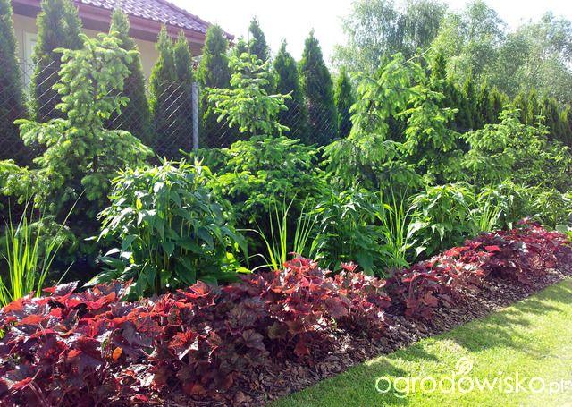 Moja codzienność - ogród Oli - strona 1467 - Forum ogrodnicze - Ogrodowisko